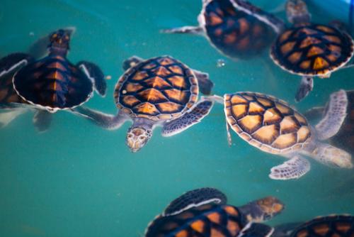 Ogni anno i rifiuti di plastica presenti negli oceani provocano la morte di 1,5 milioni di animali
