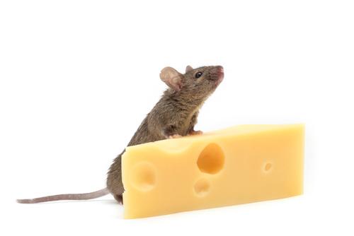 topo e formaggio