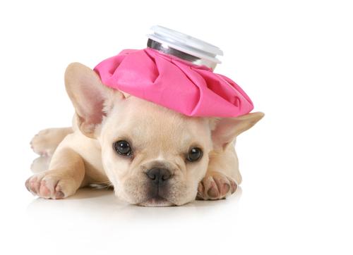 vaccinazione-cani-2