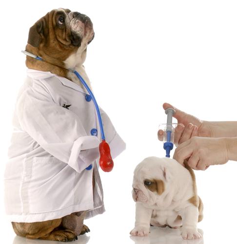 Il ciclo di vaccinazione dei cani