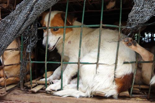 Violenza sugli animali, sintomo di malattia mentale