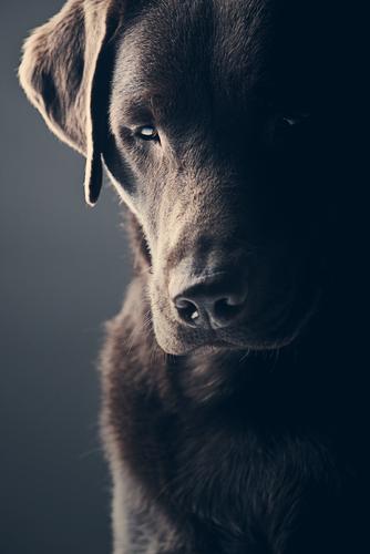 Cosa si deve fare se si è testimoni del maltrattamento di un animale?