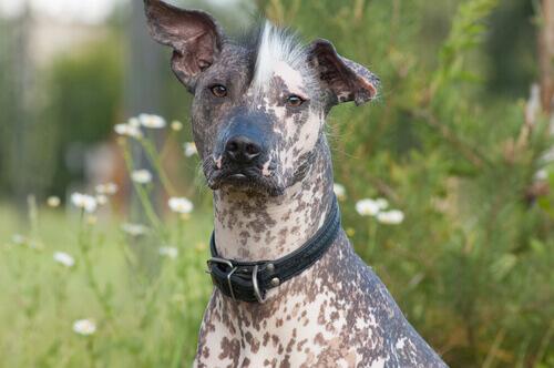 8 razze di cane che amano il caldo