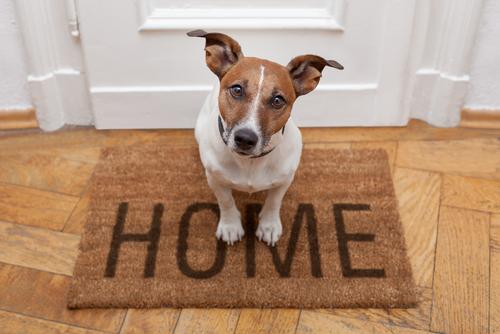 Benefici dell'avere un animale domestico