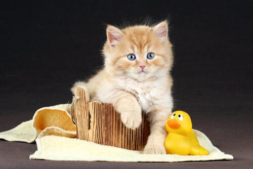 Consigli per fare il bagno al vostro gatto