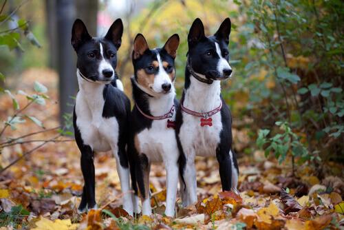 Consigli per pulire le orecchie del cane