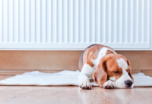 Il naso caldo dei cani è sintomo di febbre?