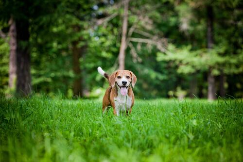 6 consigli per rendere il vostro cane felice