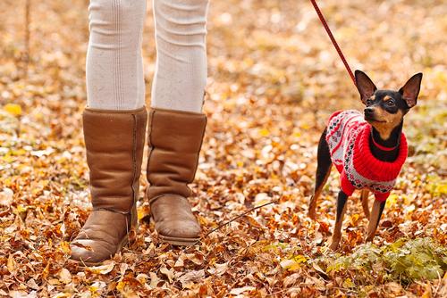 I cani e l'inverno: consigli per superare indenni questa stagione