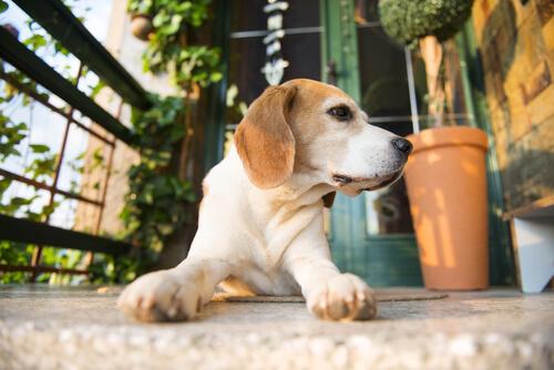 Cani da soli in casa, fateli felici
