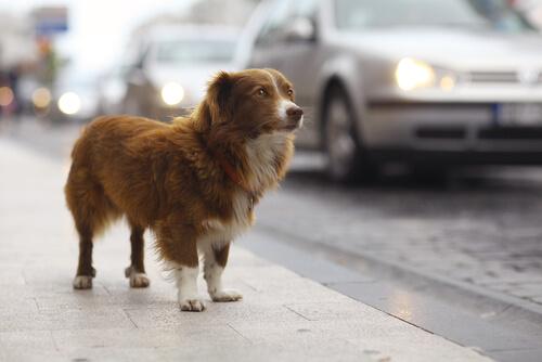 Progetto fotografico per la sensibilizzazione contro l'abbandono dei cani