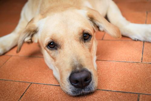 Come prendersi cura di un cane quando invecchia