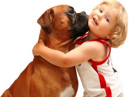 cane baciando bambino
