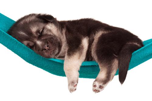 Sogni: anche i cani ne fanno?