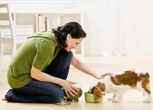 cane che mangia 3