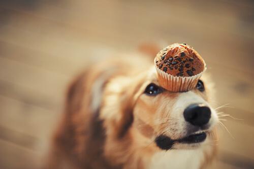 Ricetta per cani: caramelle con yogurt e burro di arachidi