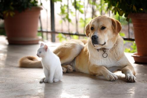 Sordità del cane e del gatto. Che fare?