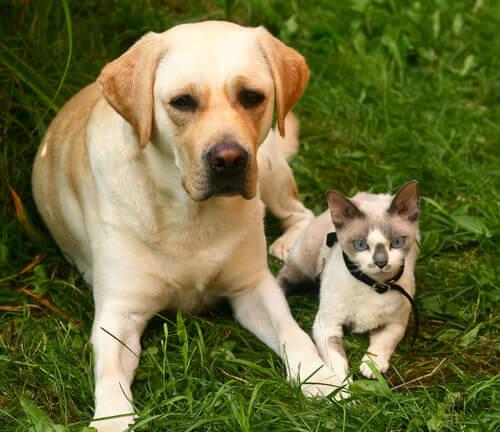 Come prevenire l'allergia agli animali domestici