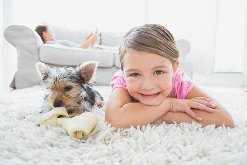 Una ricerca conferma che i cani hanno bisogni di giochi nuovi
