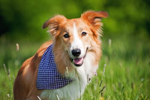 Programmi preventivi: come curare al meglio il vostro cane