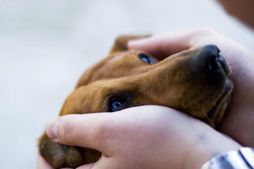 cane fra le mani