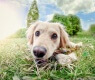 cane-nell-erba