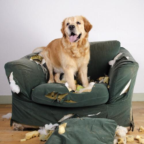 Lo stress negli animali: un male diffuso