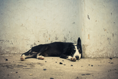 cane-per-strada
