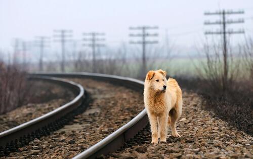 Cosa sono i cani randagi