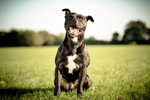 Credete che i cani sorridono?