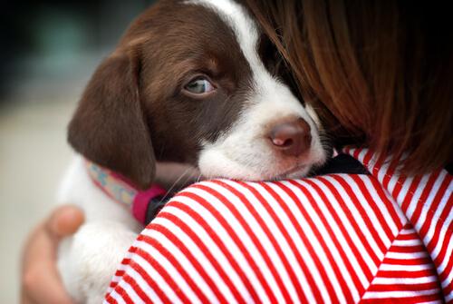 Consigli per l'addestramento di cani timidi