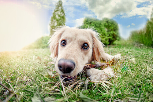 cane-tra-l'erba