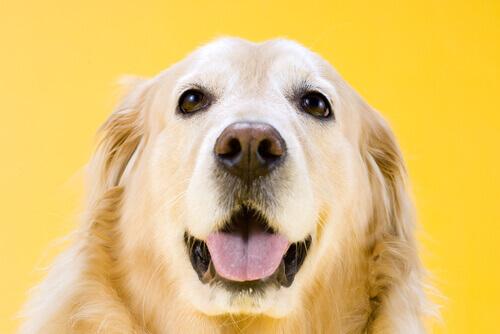 L'intuizione nei cani