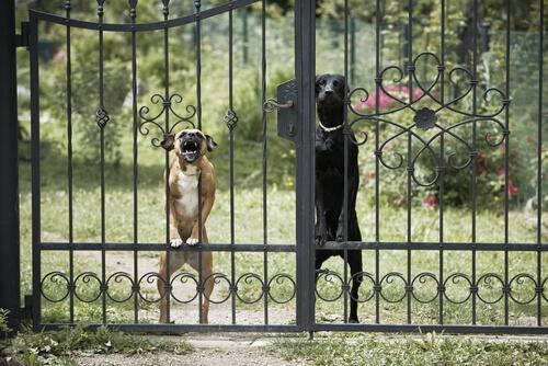 Esistono cani aggressivi o si tratta solo di padroni pericolosi?
