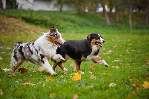 Risposte alle domande più frequenti sui cani