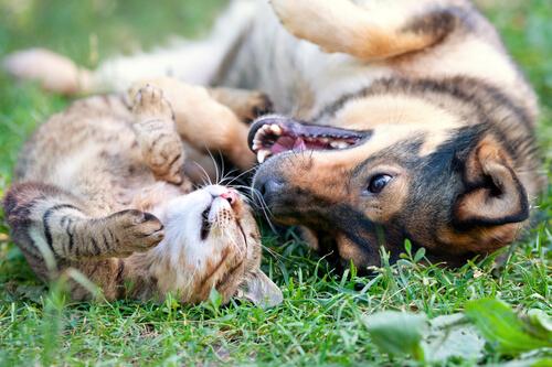Cani e gatti divertenti