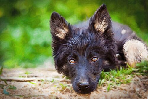 I vantaggi dei cani meticci