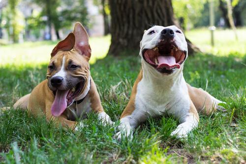 La processionaria: un pericolo mortale per il vostro cane
