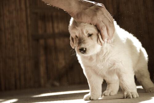 Il cane è pieno di zecche. Come rimuoverle?