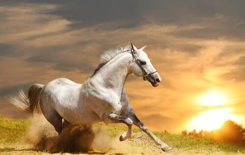 Le origini dei cavalli