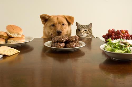 Il cibo per cani fa male ai gatti? E viceversa?
