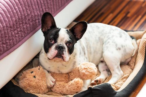 Cucce per cani facili e veloci da realizzare