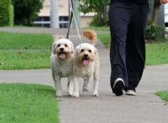 cuccioli-a-passeggio