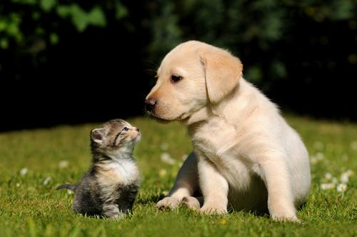 cucciolo-con-gatto