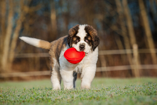 L'importanza dell'alimentazione nello sviluppo dei cuccioli