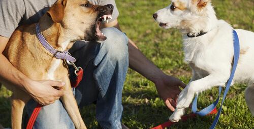 Consigli per risolvere le dispute tra animali domestici