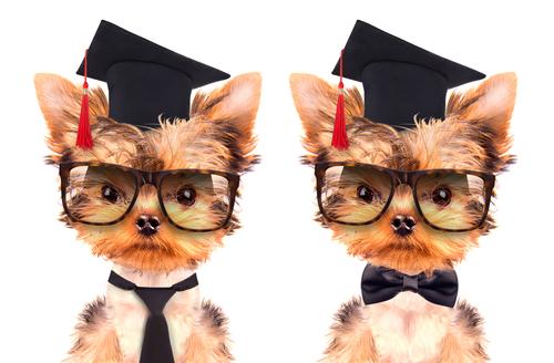 3 segreti per educare un cucciolo