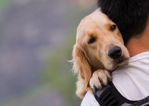 abbraccio tra cane e padrone