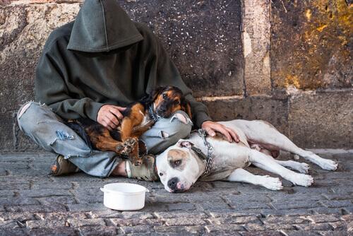 Fedeltà a prova nei peggiori momenti: mendicanti con i loro cani