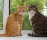 gatti-alla-finestra